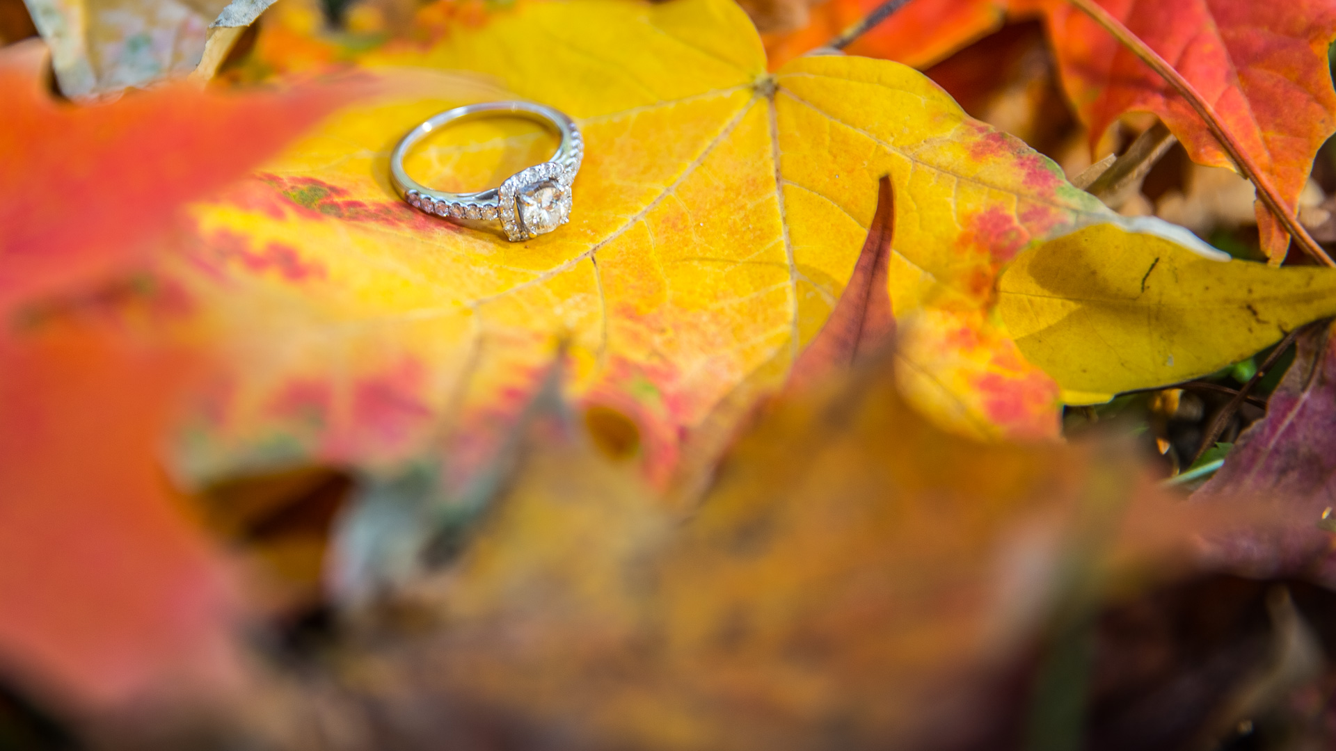 epic_sky_pictures_bridal_ring_photography_accessories_wedding_weddingday_details_shiny_diamond_wedding_putaringonit_bride_just_married